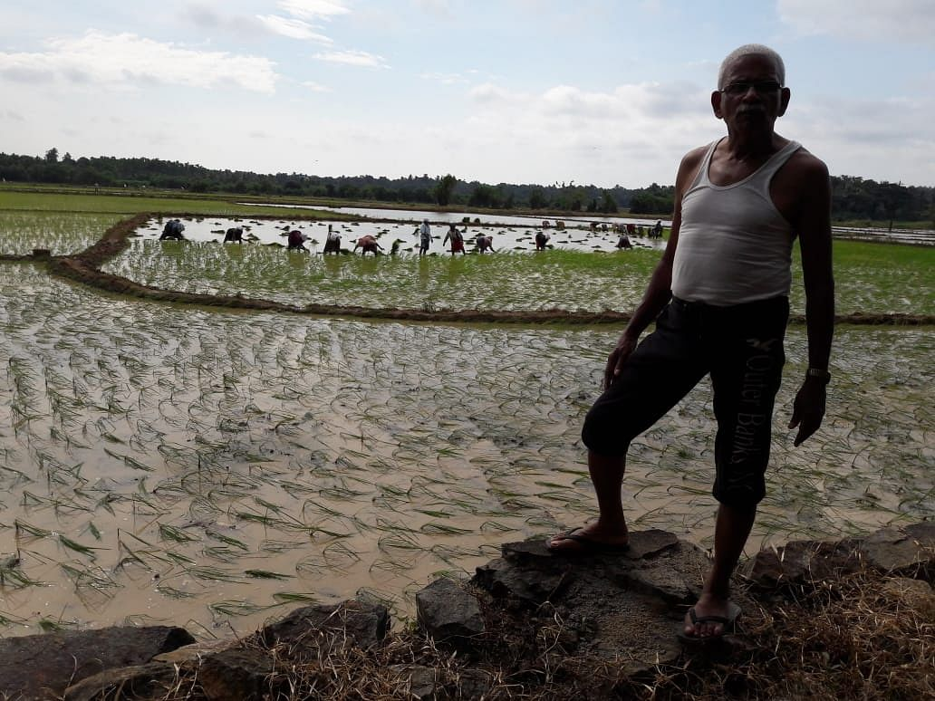Abu Haaji oversees paddy cultivation