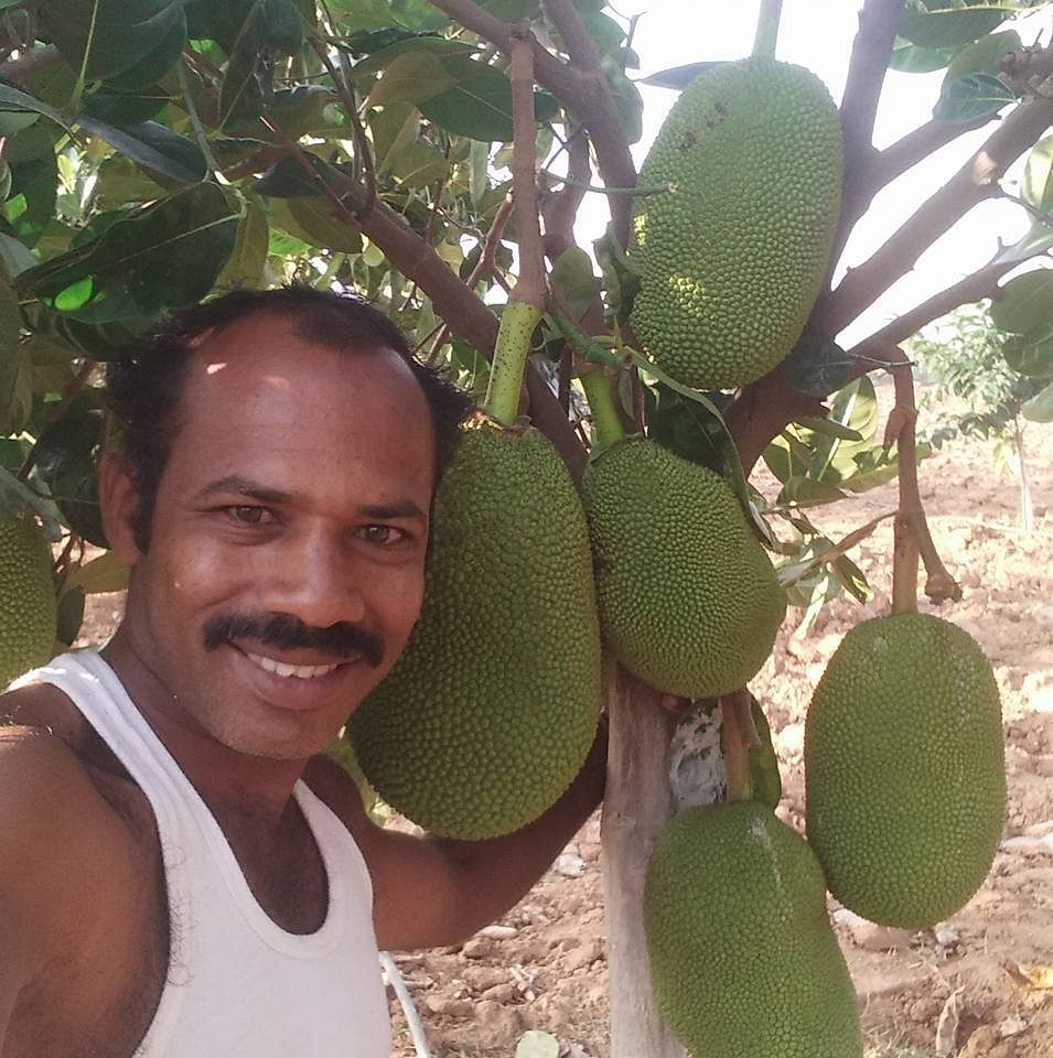 Jack Anil in his jack fruit farm