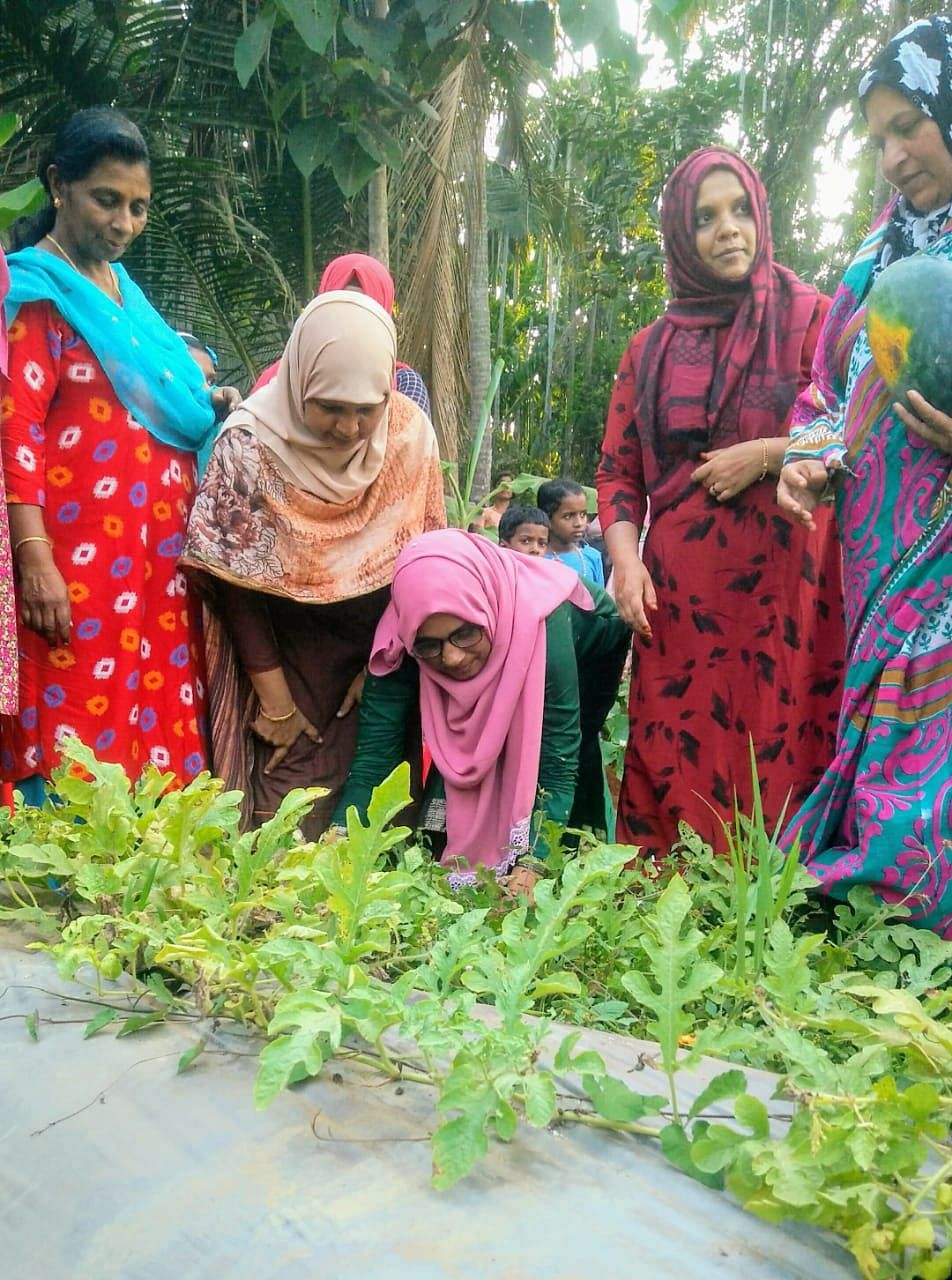 Members of all-woman Penmitra group harvest organic vegetables