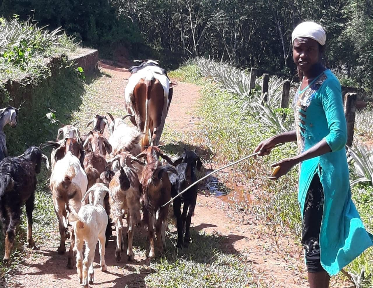 Sreya says these goats and cows are her only solace