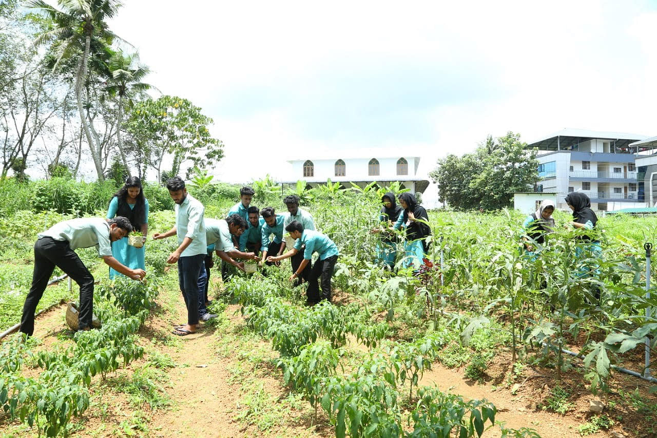 The farming in the college is fully organic. No pesticide is used.