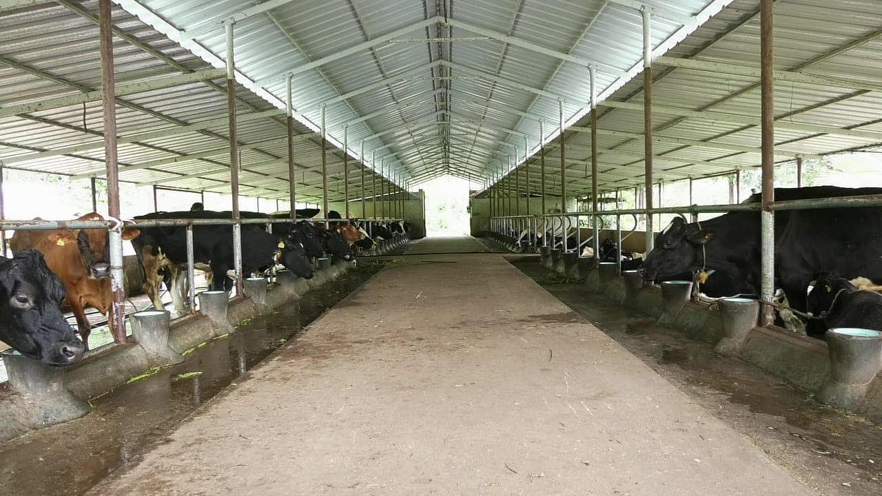 Fully mechanized dairy farm